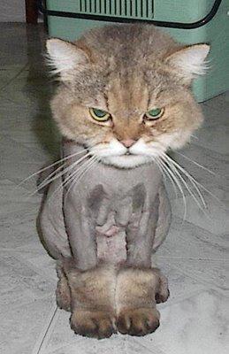 Бритые коты