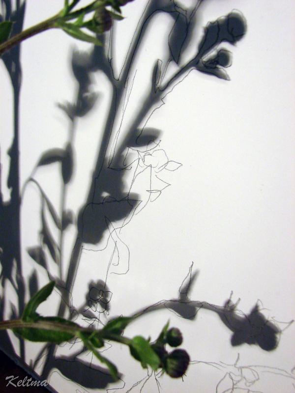 Красивые ажурные тени