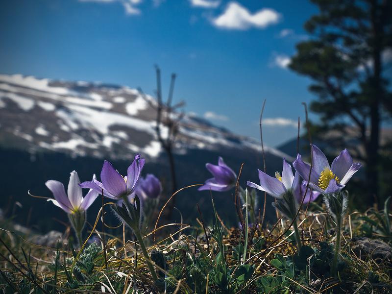 Цветок небесная наки