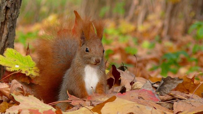 осень и животные 3 (700x393, 301Kb)
