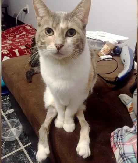 В Индиане с улицы спасли необычную кошку
