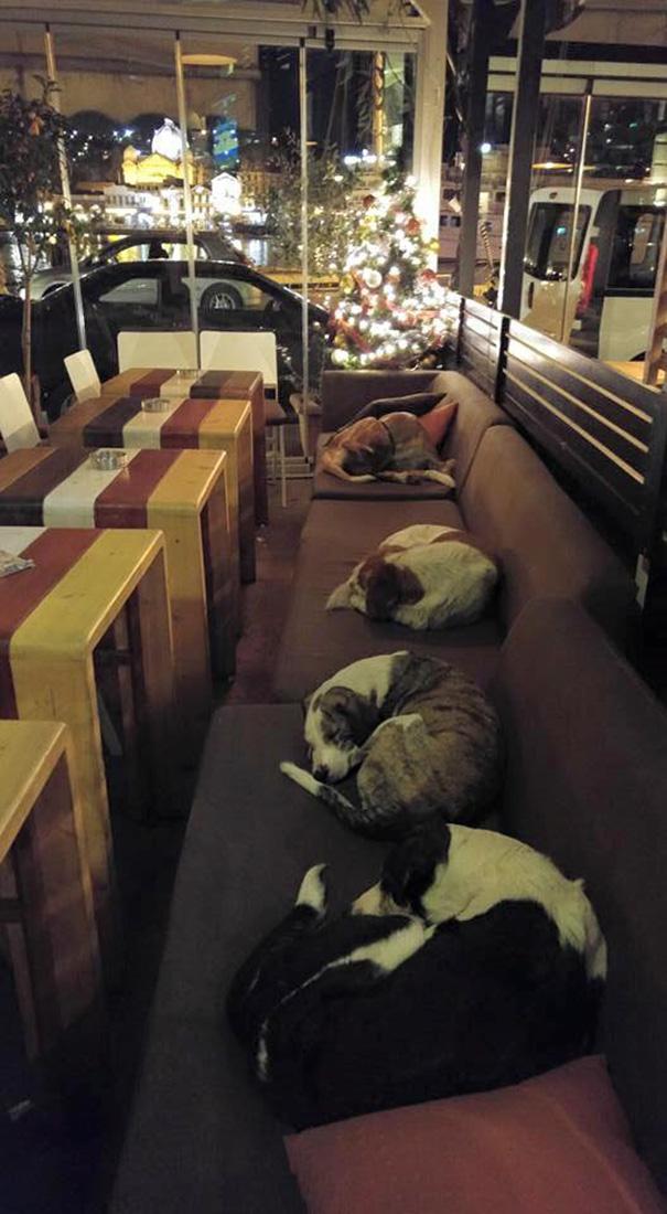 Хозяева греческого кафе пускают бездомных собак переночевать в пустом зале