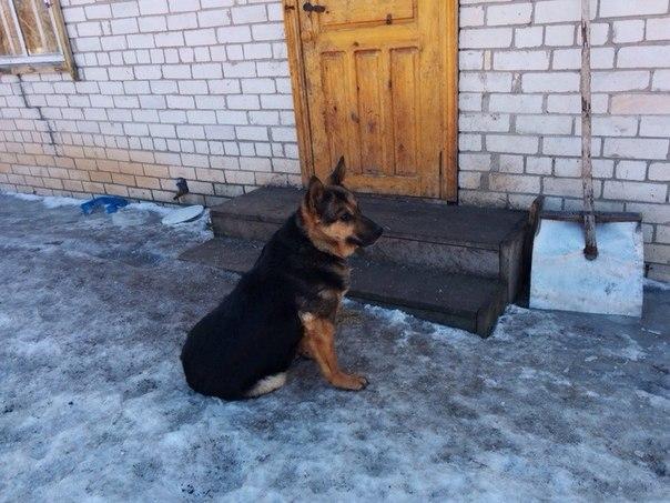 История о спасении собак с УАЗ....
