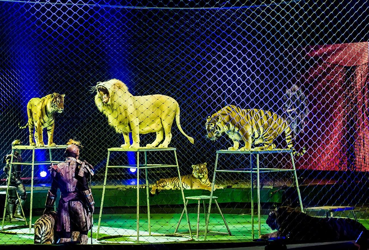 И почаще приходите в цирк