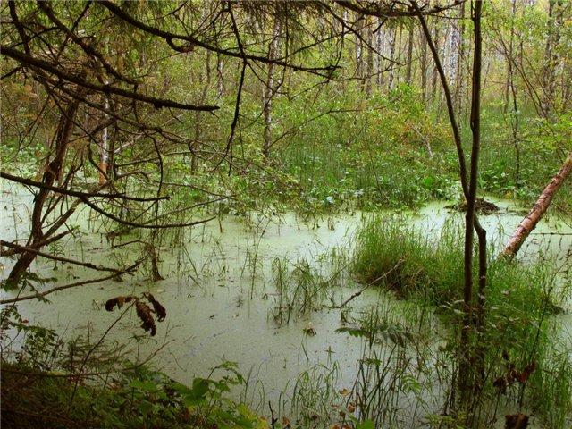 Какие тайны скрывают болота?