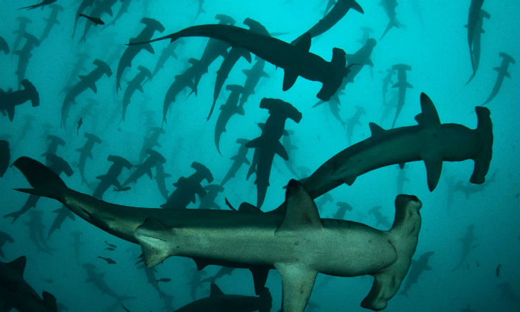 Там, где акулы хранят сокровища разбитых кораблей
