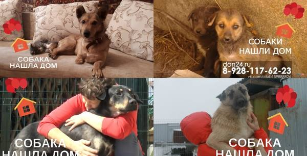 За время акции «ДОН 24» 30 собак обрели семью: 18 августа – Всемирный день бездомных животных