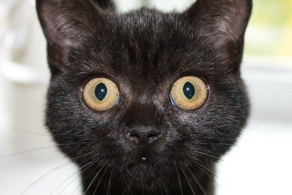 мнению политолога в доме нет кошки долго не живут Методики выявления