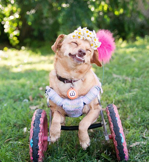 Жизнерадостная собака по кличке Дейзи, которую спасли от эвтаназии