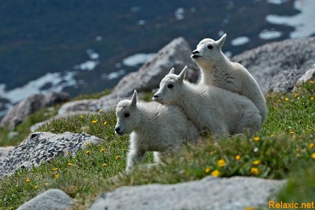 wild_animals_023