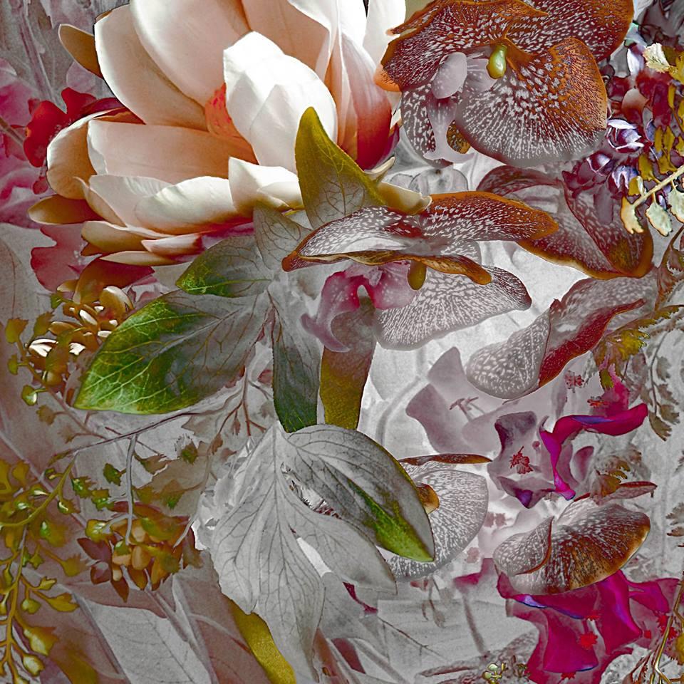 Цветение райских садов на фотографиях Кэролин Луиз Ньхауз