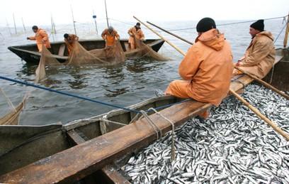 Росрыболовство: вылов рыбы с начала года увеличился на 7%