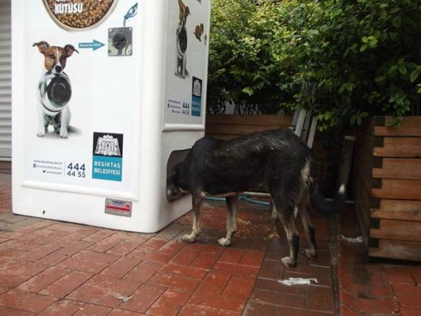 Автомат, который кормит бездомных животных