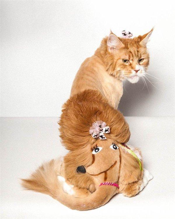 Что значит быть любимым котом начинающего парикмахера?