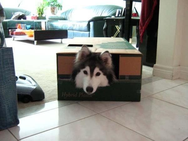 Пес вырос в семье врагов собачьего рода. Просто поразительно, что из этого вышло!