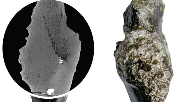 Древняя черепаха развенчала миф о связи рака и технического прогресса                     (1 фото)