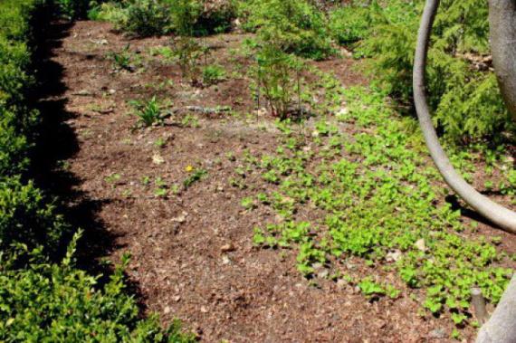 как избавится от сорняков: Органическое земледелие, пермакультура