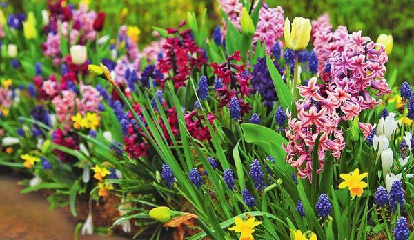 Луковичный беспредел вы с легкостью можете устроить в любом уголке сада