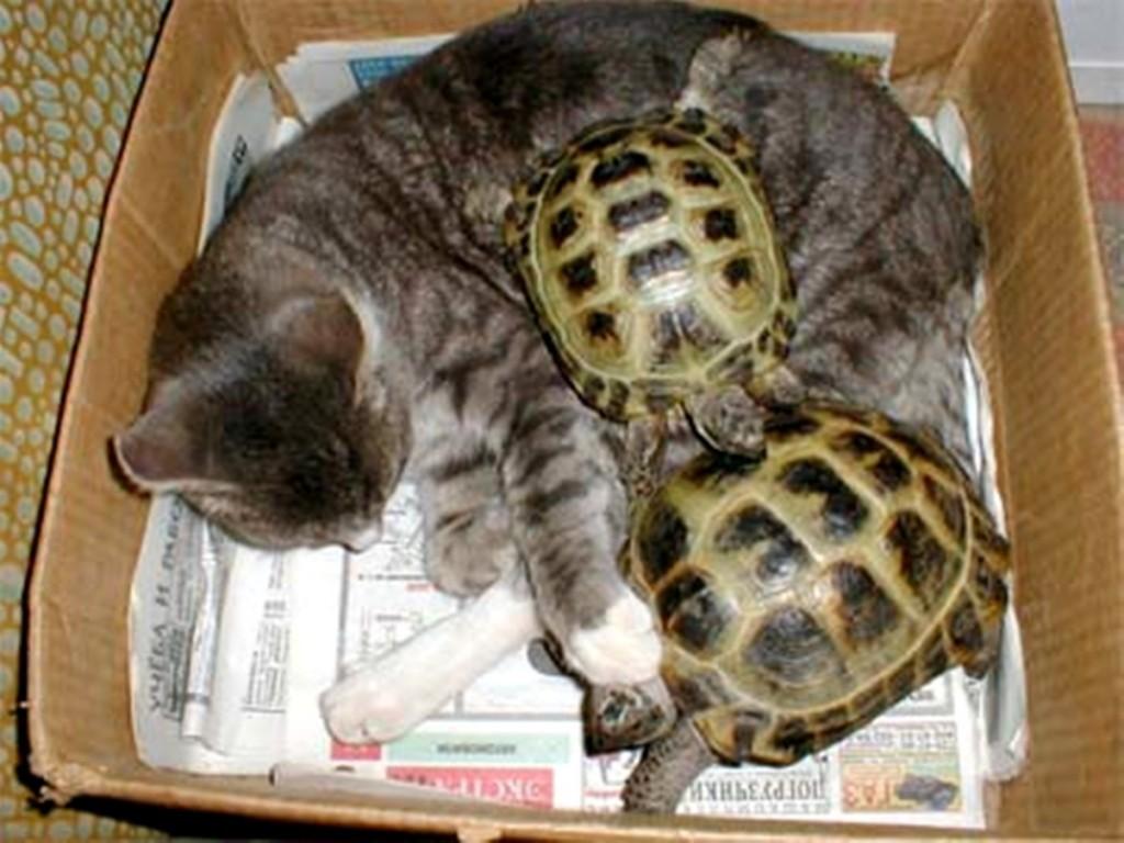 Что едят серые черепахи в домашних условиях