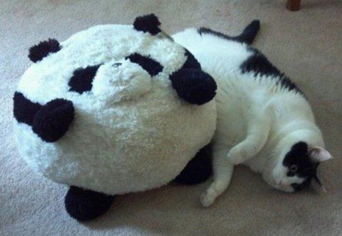 Найди кота (10 фото)