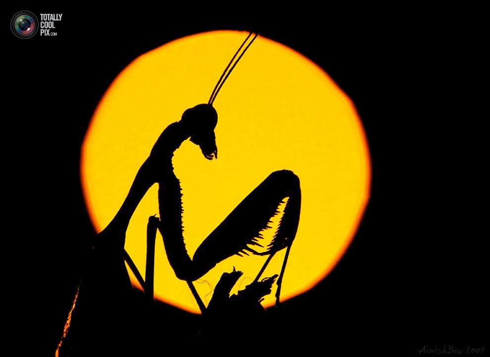 aimishboy 002 Удивительная макрофотография: неожиданно гламурные насекомые и многое другое