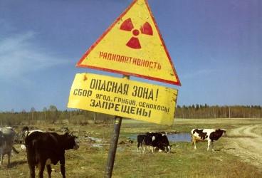 Жизнь в радиоактивной зоне
