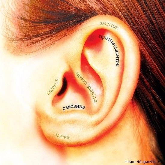 Простые упражнения для улучшения кровообращения слуховой системы