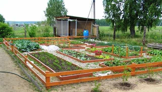 Красивый огород своими руками..
