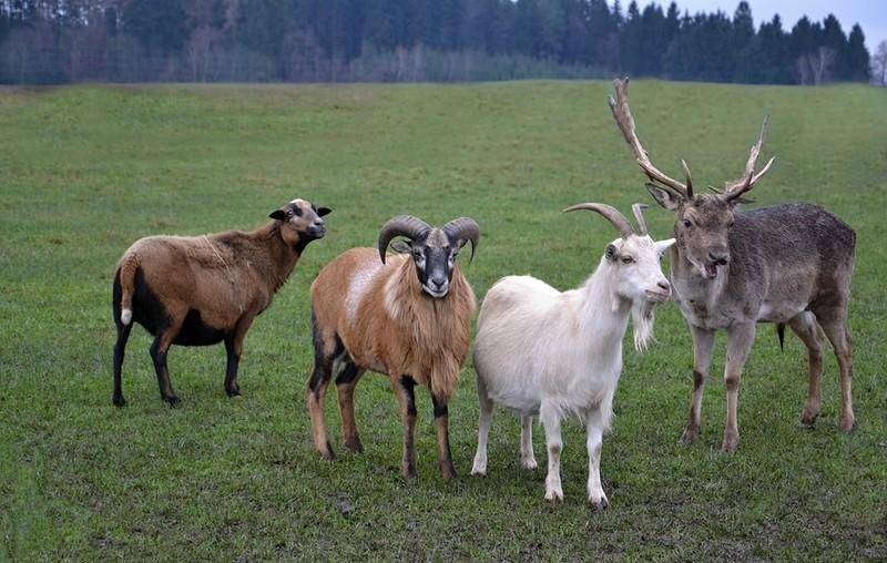Этот удивительный мир, животных