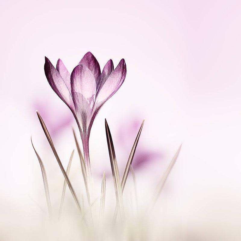 Прекрасные и нежные цветы фотографа Кристин Эллджер