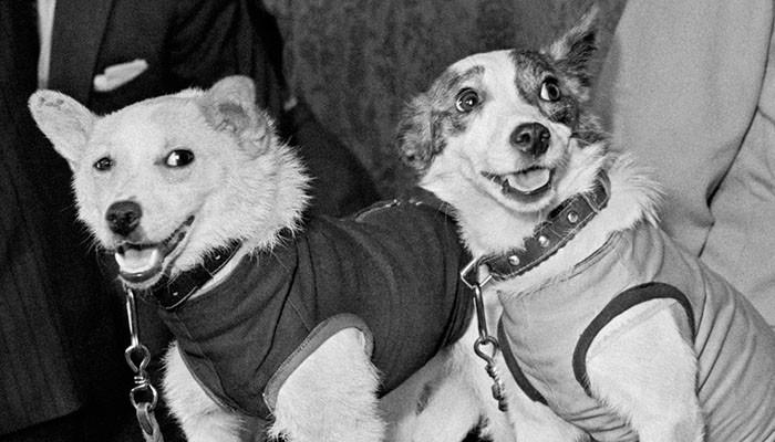 6. Белка и Стрелка — первые собаки в космосе заблуждения, мифы