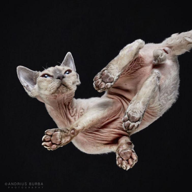 Обратная сторона кота