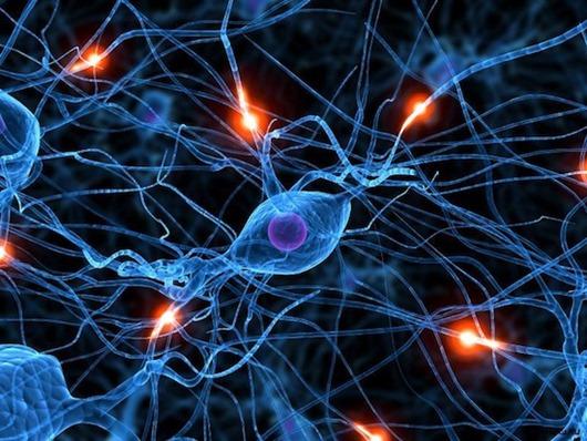 Странные теории о происхождении разума