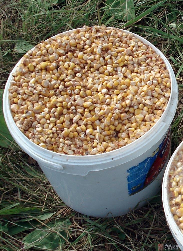 Желтая загадка. Место кукурузы в карповой ловле