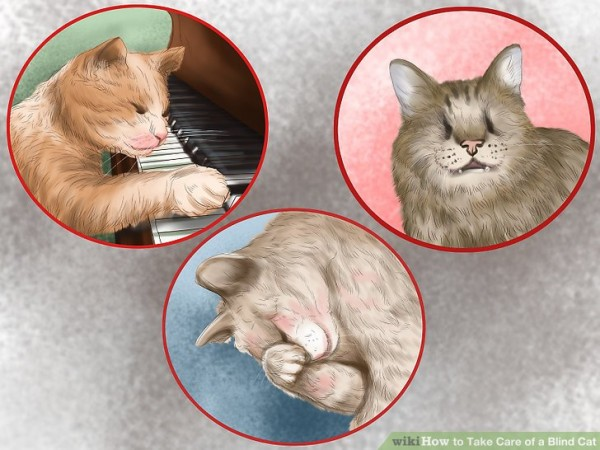 Слепые кошки. Часть 2