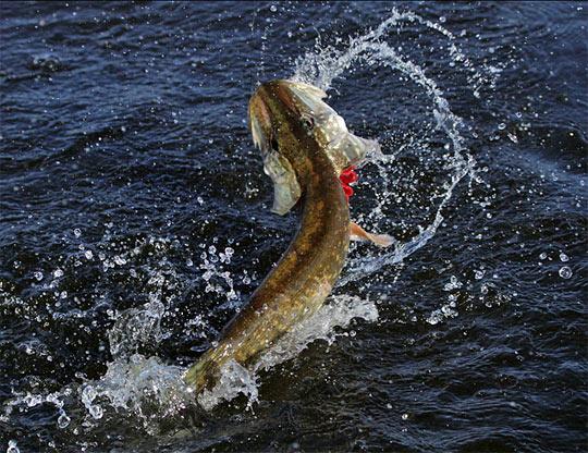 рыбалка на спиннинг краснодарский край
