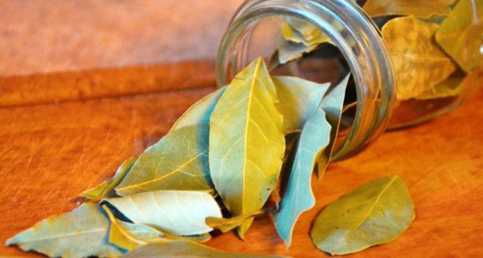Лавровые листья при болях в ногах