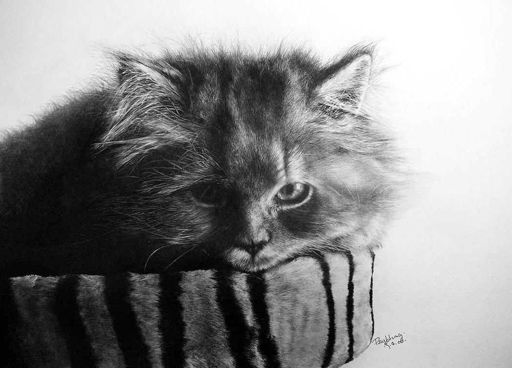 drawncats05 Мастер карандашного наброска — Пол Ланг
