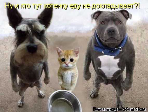 Котоматрица: Ну и кто тут котенку еду не докладывает?!