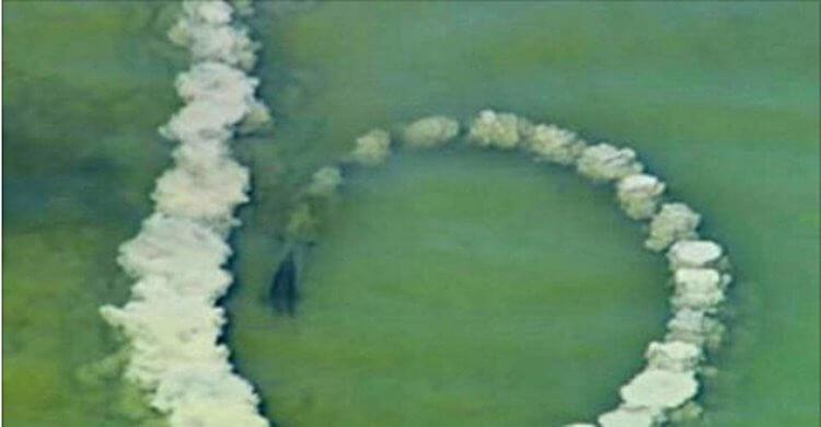 Дельфин делает круг из песка и замирает, а через секунды  —  невероятное зрелище…