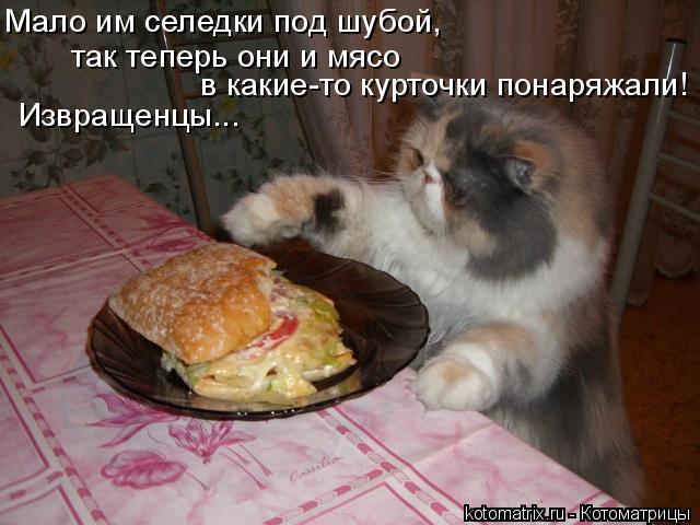 Котоматрица: Мало им селедки под шубой, так теперь они и мясо в какие-то курточки понаряжали! Извращенцы...