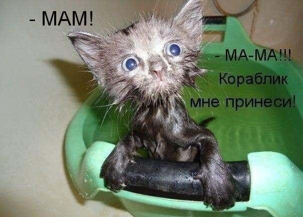 Чудесные котоматрицы для хорошего настроения