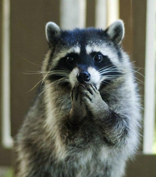 Удивленные животные – милейшее зрелище.