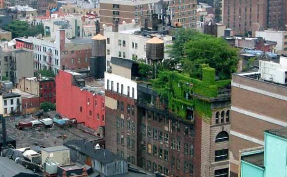 зеленые крыши: Зеленые крыши, сады на крыше