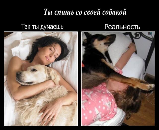 акрилового герметика статус про собачий сон Узбекистана Москве время