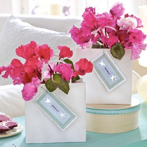 Новогодние идеи из комнатных цветов и растений