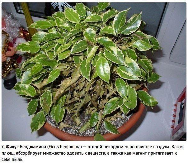 Растения - очистители воздуха!