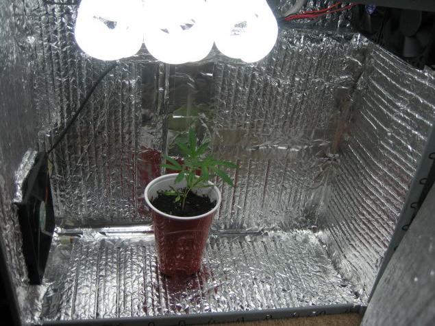 Бокс для выращивания растений