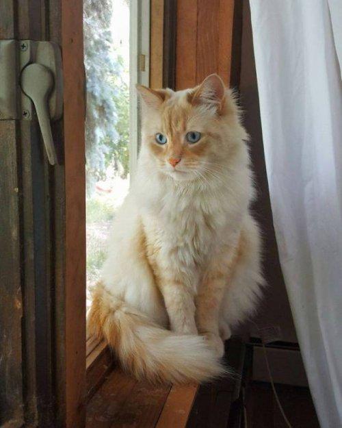 Кот, который притягивает к себе зверей