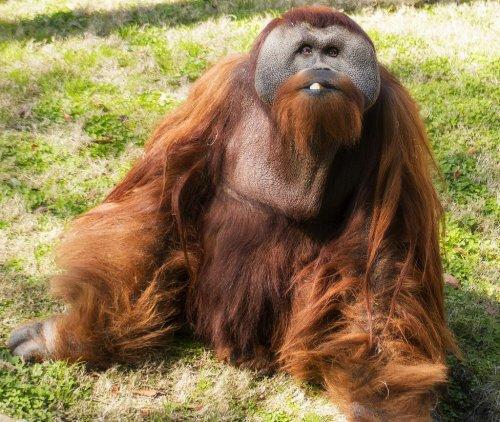Топ-12: Зоопарки, потерявшие…